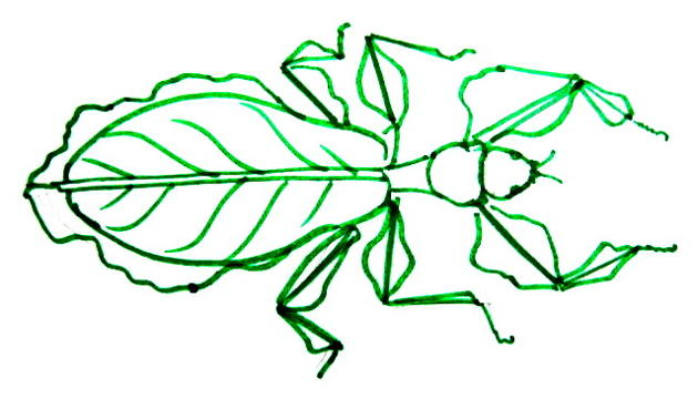 Leaf Insect picture
