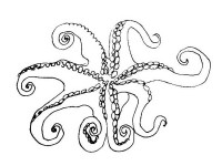 Octopus coloring page - bottom view