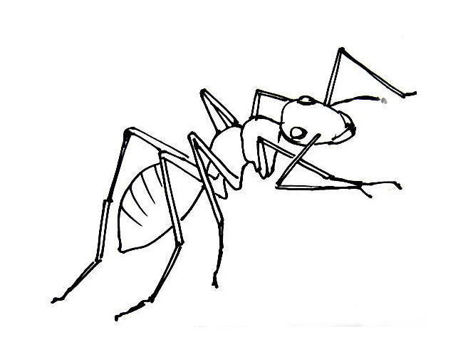 Ant coloring picture