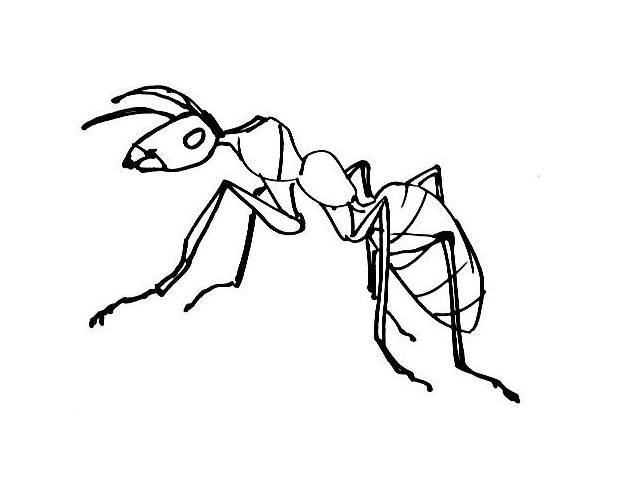 Ant coloring picture 3