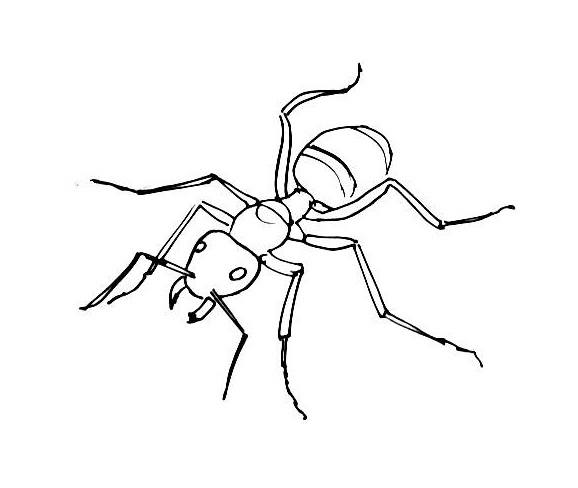 Ant coloring picture - top view