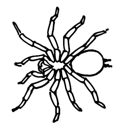 Bird spider  drawing