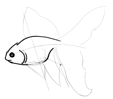 Gold Fish head and body  drawing