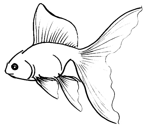 Gold Fish Picture