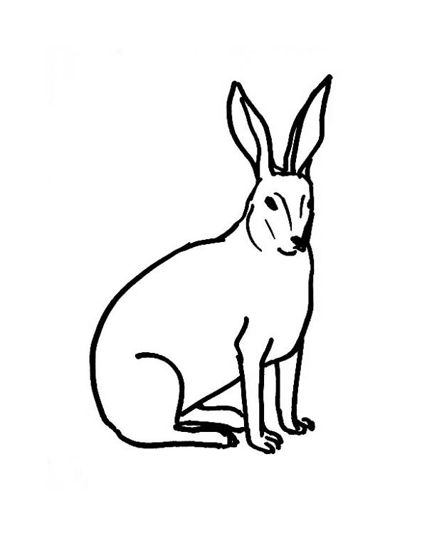 Desert Hare Coloring Pages Sketch