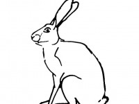 Sitting Hare coloring picture