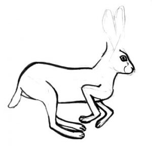 Hare gradual drawing
