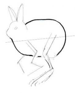 Hare body drawing