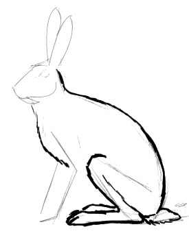 Phased Hare drawing
