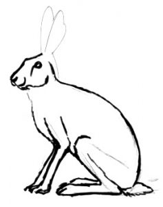 Hare drawing lesson