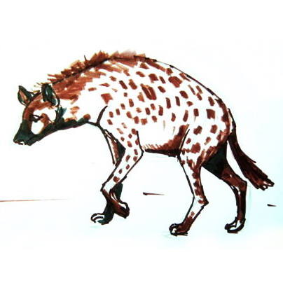 Hyena colored drawing -7