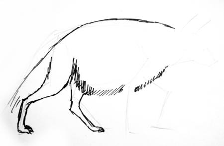 Hyena phased drawing