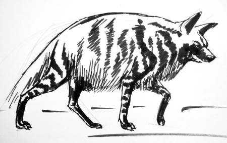 Strped hyena drawing