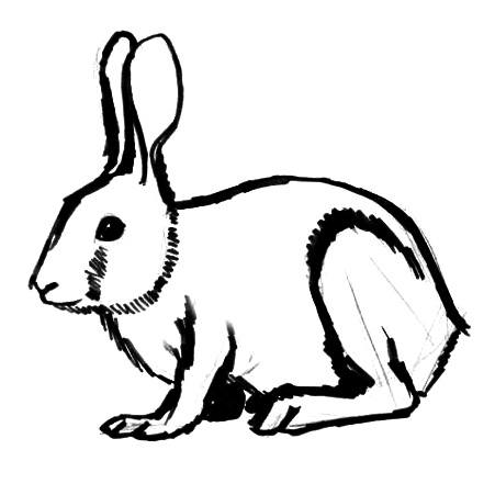 Rabbit drawing 13