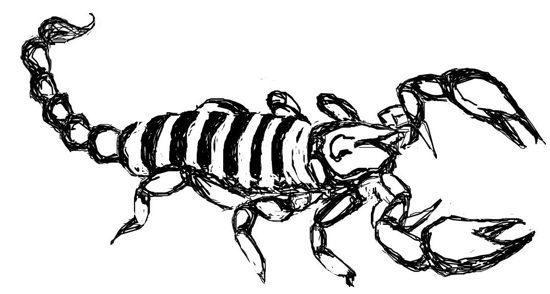 Scorpion line drawing