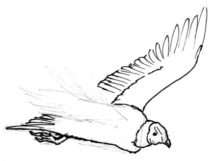 Vulture wings drawing