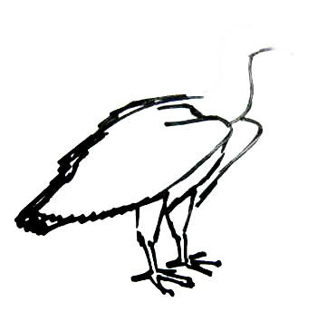 Vulture paws drawing