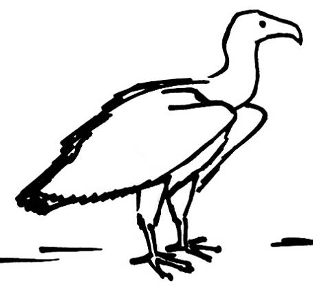 Vulture drawing