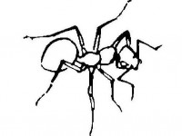 Ant coloring 13
