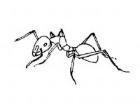 Ant coloring page/sheet