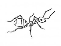 Ant coloring page 1313