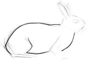 Bunny torso drawing