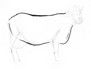 Cow step by step drawing lesson
