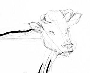 Cow`s head structure