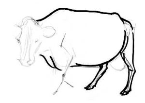 Cow torso and hind legs drawing