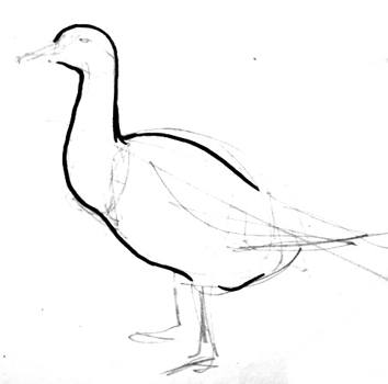 Goose  drawings and pictures.