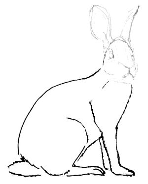 Hare drawing lessons