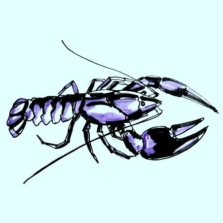 Crayfish drawing