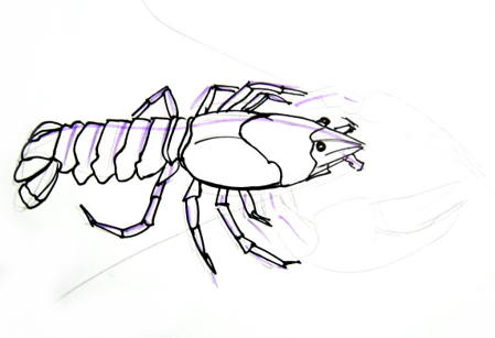 Crayfish drawing 13