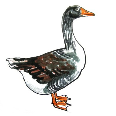 Goose  colored drawing -2