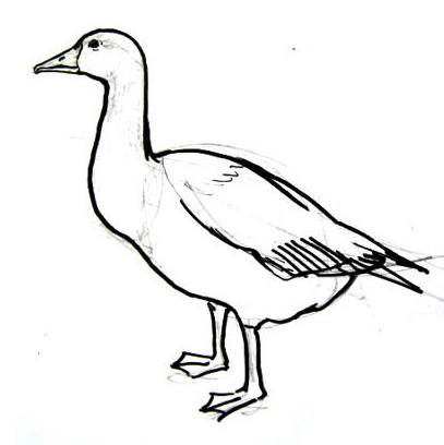 Goose drawing 19