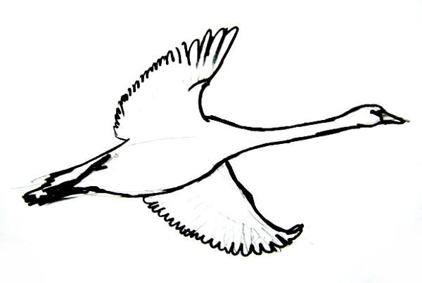 Flying goose picture