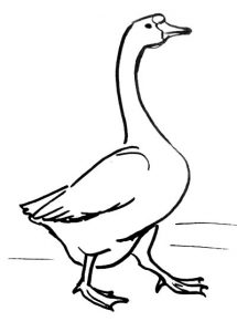 step-by-step-goose-drawing-32-049111