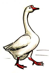 step-by-step-goose-drawing-32-051111