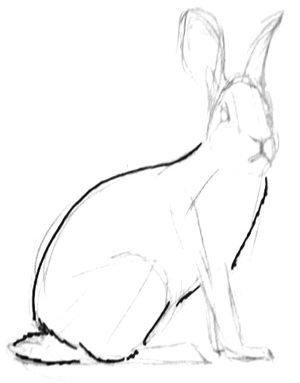 Hare drawing tutorial