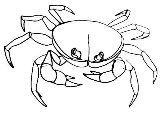 Crab drawing 13