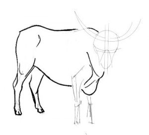 Bull drawing for kids -3