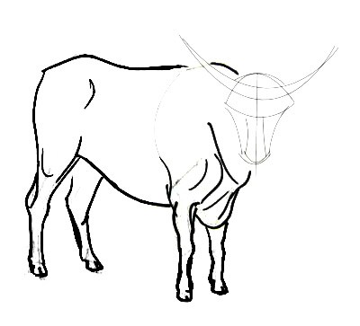 Bull  drawing  step by step
