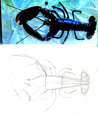 How to draw a Lobster.