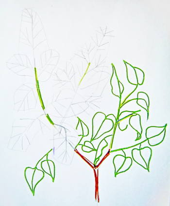 Lilac branch drawing