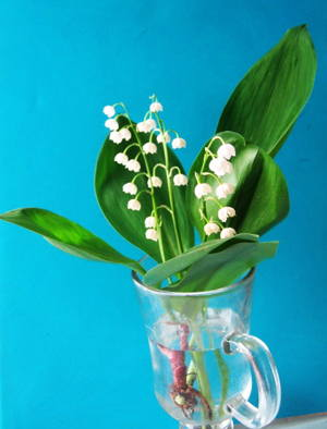 Lilies of the valleys photo