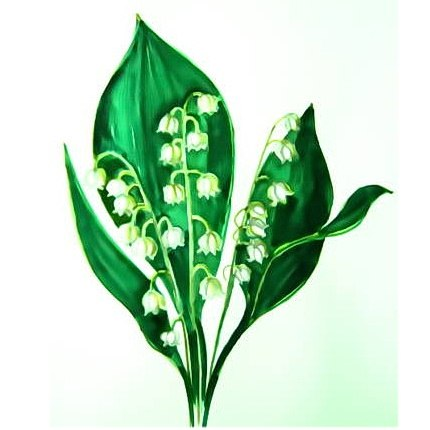 Lily of the valleys drawing 13