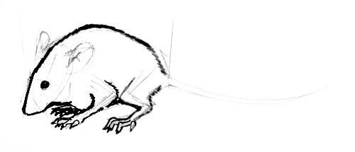 Mouse  drawing tutorial