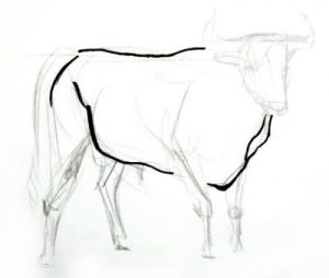 how to draw a realistic bull head