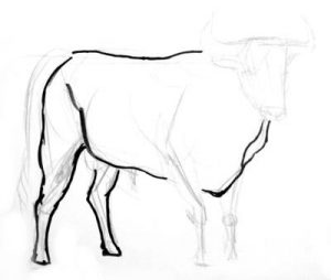 Bullfighting bull drawing step by step