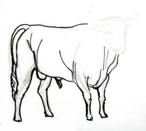Bullfighting bull staged drawing